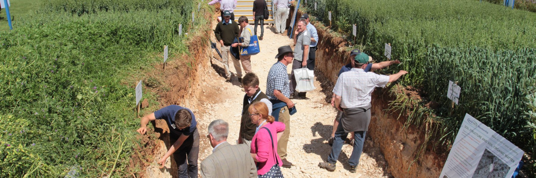 The Soil Pit - Cereals 2017